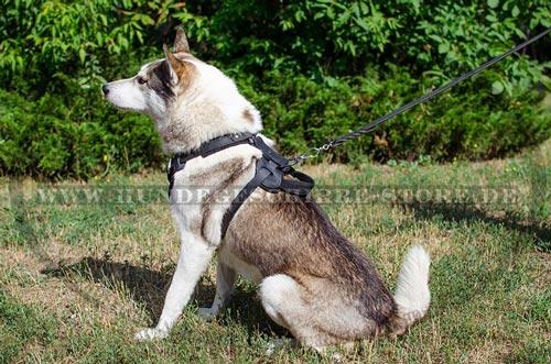 Leder Hundegeschirr für großen Hund kaufen