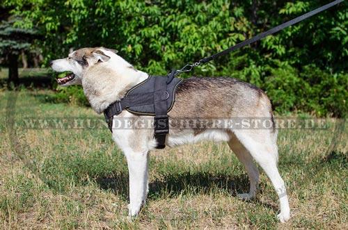 Laika Hundegeschirr aus Nylon