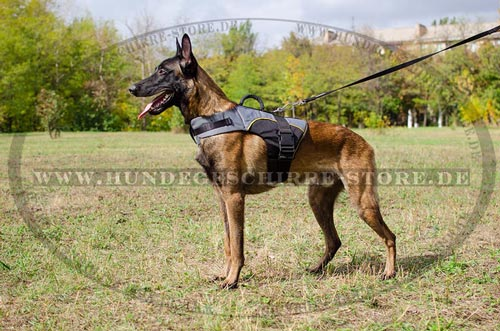 Malinois harness with warm padding