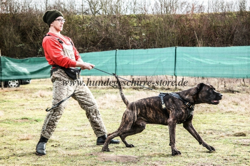 K9 Training Harness American Bandogge Mastiff