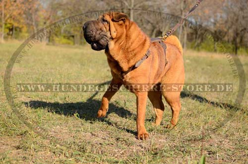 walking dog harness for Shar Pei exclusive