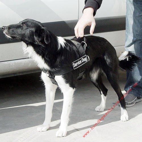 Hundegeschirr K9 F 252 R Border Collie