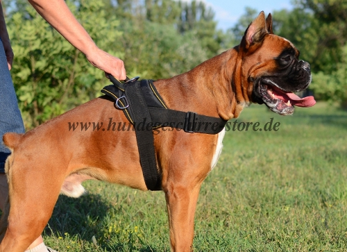 Boxer Harness K9
