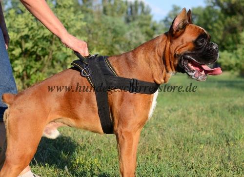 Boxer Geschirr K9 Nylon mit Griff
