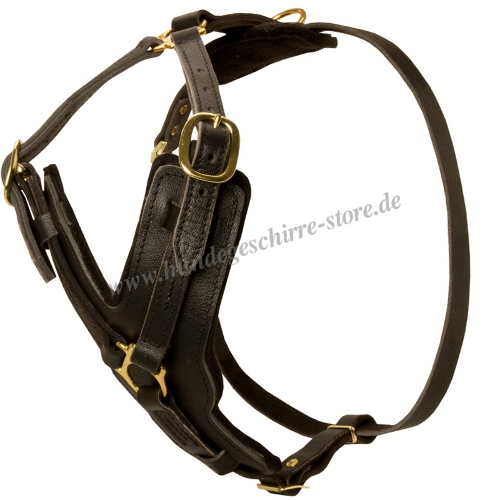 chest harness leather Padded American Pit Bull