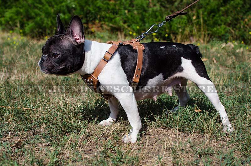 laufgeschirr mit pyramiden französische bulldogge ~ Geschirr Französische Bulldogge