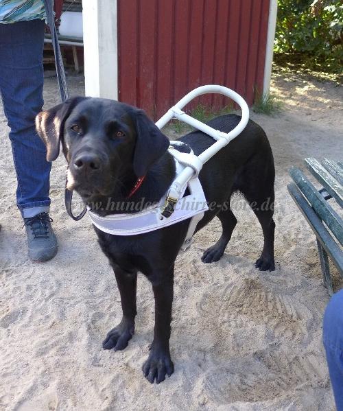 Blindenhundgeschirr kaufen