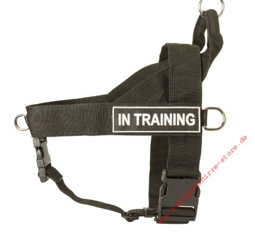Rhodesian Ridgeback Theraoy Dog Training