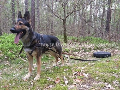 Hundegeschirr fuer Reifen Sport