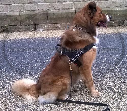 Flexi Roll-Leine für Hundeausläuge mit mittelgroßen und großen Hunden