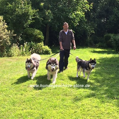 Husky Hunde-Leinen Nylon für Hundetraining