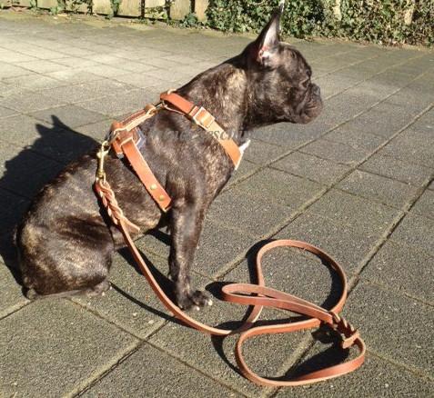 Hundeleine Führleine aus Leder für Alltag und Hundetraining