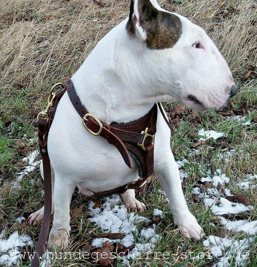 Hundeleine aus Leder mit geflochtenen Elementen, stilvoll