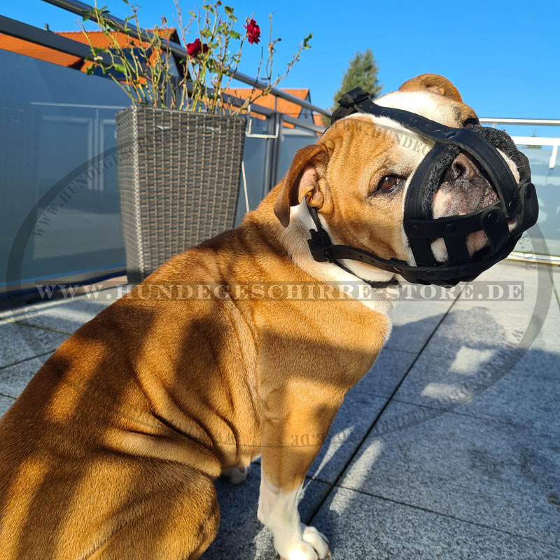 Hundemaulkorb Leder für Hunderassen mit kurzer Schnauze wie Bulldogge