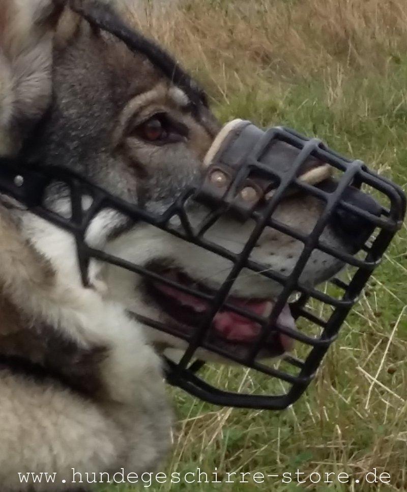 Ziemlich Hund Kauen Drähte Fotos Zeitgenössisch - Elektrische ...