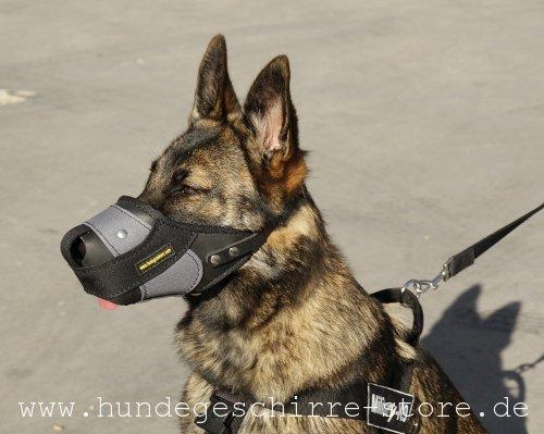 Kombinierter Nylon- mit Ledermaulkorb für Alltag des Hundes