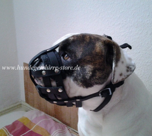 bulldog muzzle leather buy