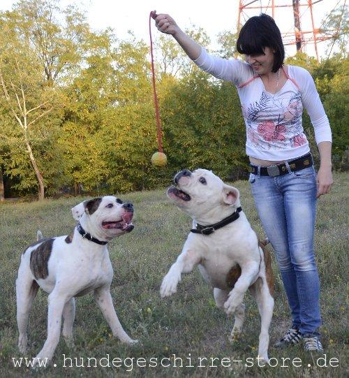 praktischer Hundeball fuer training und dressur