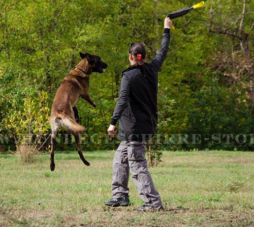 Beißwulst für Hündinen von Rottweiler, Malinois