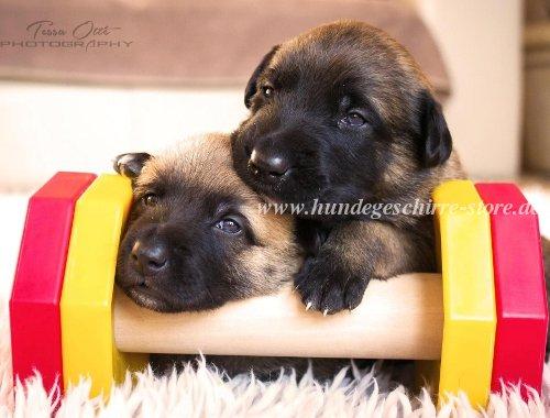 wie lange dauert eine hundeschwangerschaft hundegeschirr leder geschirre sport und dienst zu. Black Bedroom Furniture Sets. Home Design Ideas