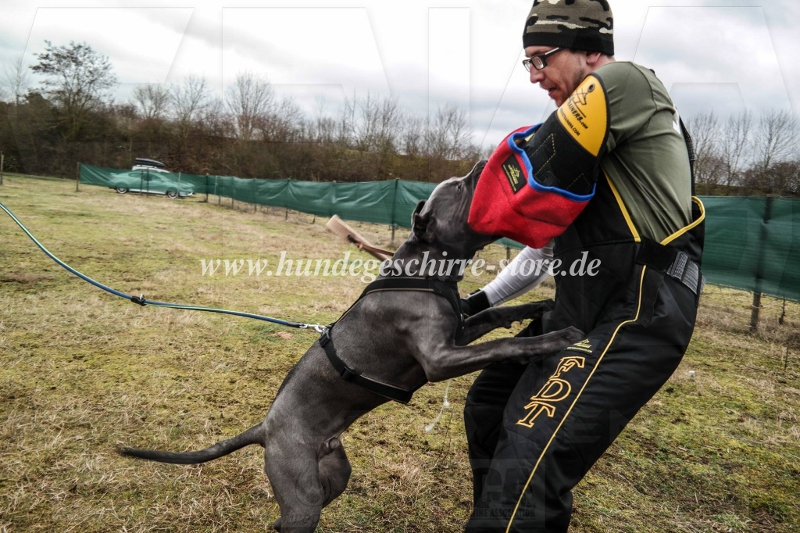 Ipo Dog Training Equipment