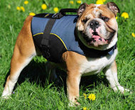 Nylon Outdoor dog harness for tracking for English Bulldog