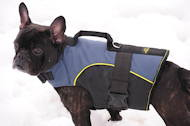 Nylon tracking harness for small dogs like French bulldog