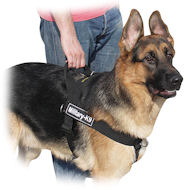 Everyday Dog Harness, Power Training Harness for German Shepherd