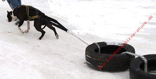 Reifen Geschirr Hund