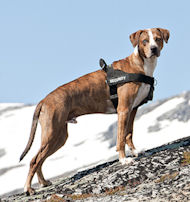 Neues Allwetter-Hundegeschirr aus Nylon K9, Catahoula