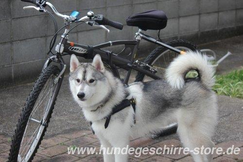 Hundegescirr für Sommer-Sport