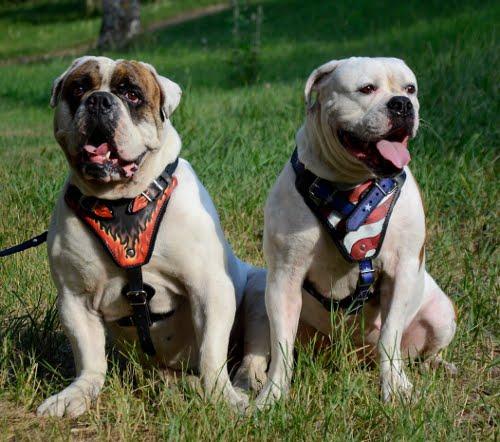 Leder Hundegeschirre mit stilvoller Bemalung