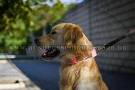 Leder Hundehalsband für Golden Retriever in Rosa, elegant