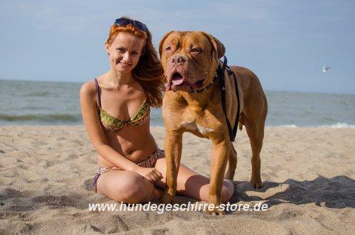Hundezubehöre für Urlaub
