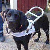 Labrador Blindenhund Geschirr | Leder Hundegeschirr Weiß