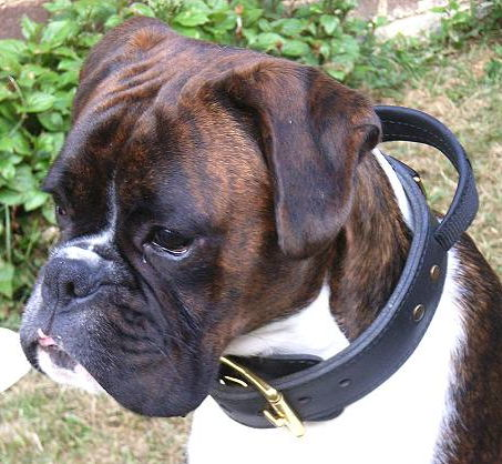 /images/large/Boxer-Hetz-Hundehalsband-mit-Griff_LRG.jpg