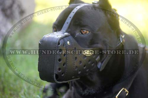 Muzzle Leather safe