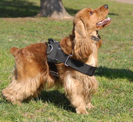 Nylon Hundegeschirr