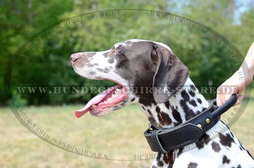 Dalmatiner Halsband Breit Leder