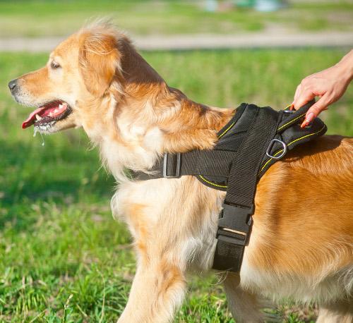 Nylon Geschirr für Hund Deutschland