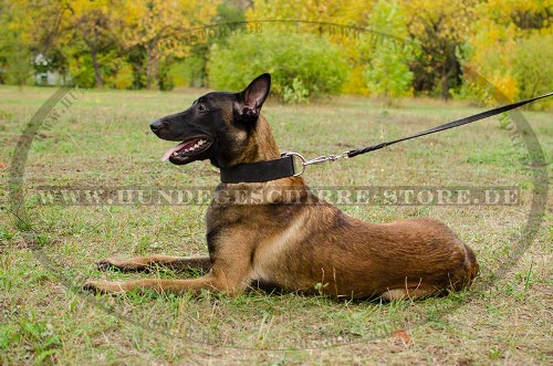 Robustes Lederhalsband 5 cm breit für Diensthunde Training