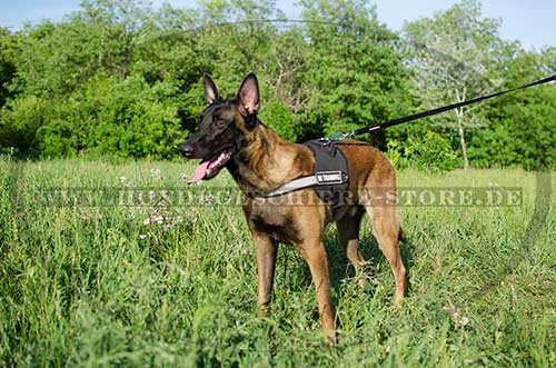 /images/large/Malinois-Geschirr-K9-Nylon_LRG.jpg