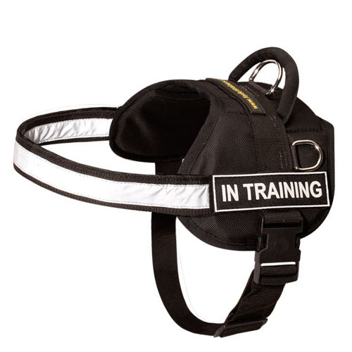 sport harness with reflective band