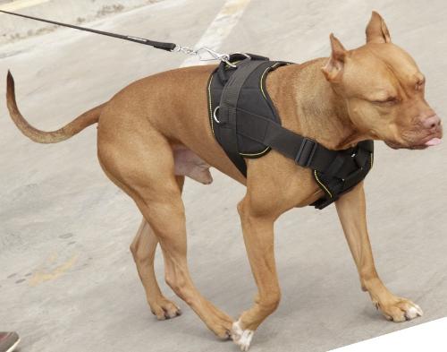 Geschirr für aktiven Sport mit Pitbull Hund!  €5 ~ X Geschirr Hund
