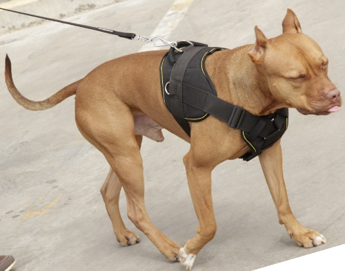 geschirr f r aktiven sport mit pitbull hund 59 9. Black Bedroom Furniture Sets. Home Design Ideas