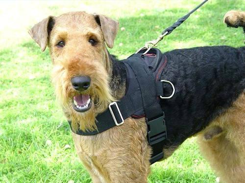Allwetter-Hundegeschirr aus Nylon H6 für Airedale Terrier