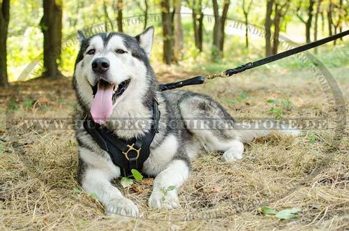 Ledeleine für Hundetraining und Sport
