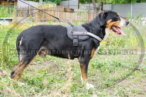 harness nylon for swiss mountain dog