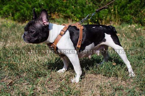 Hundeleine mit Zankenhalen