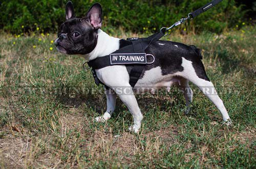 french bulldog harness for sport